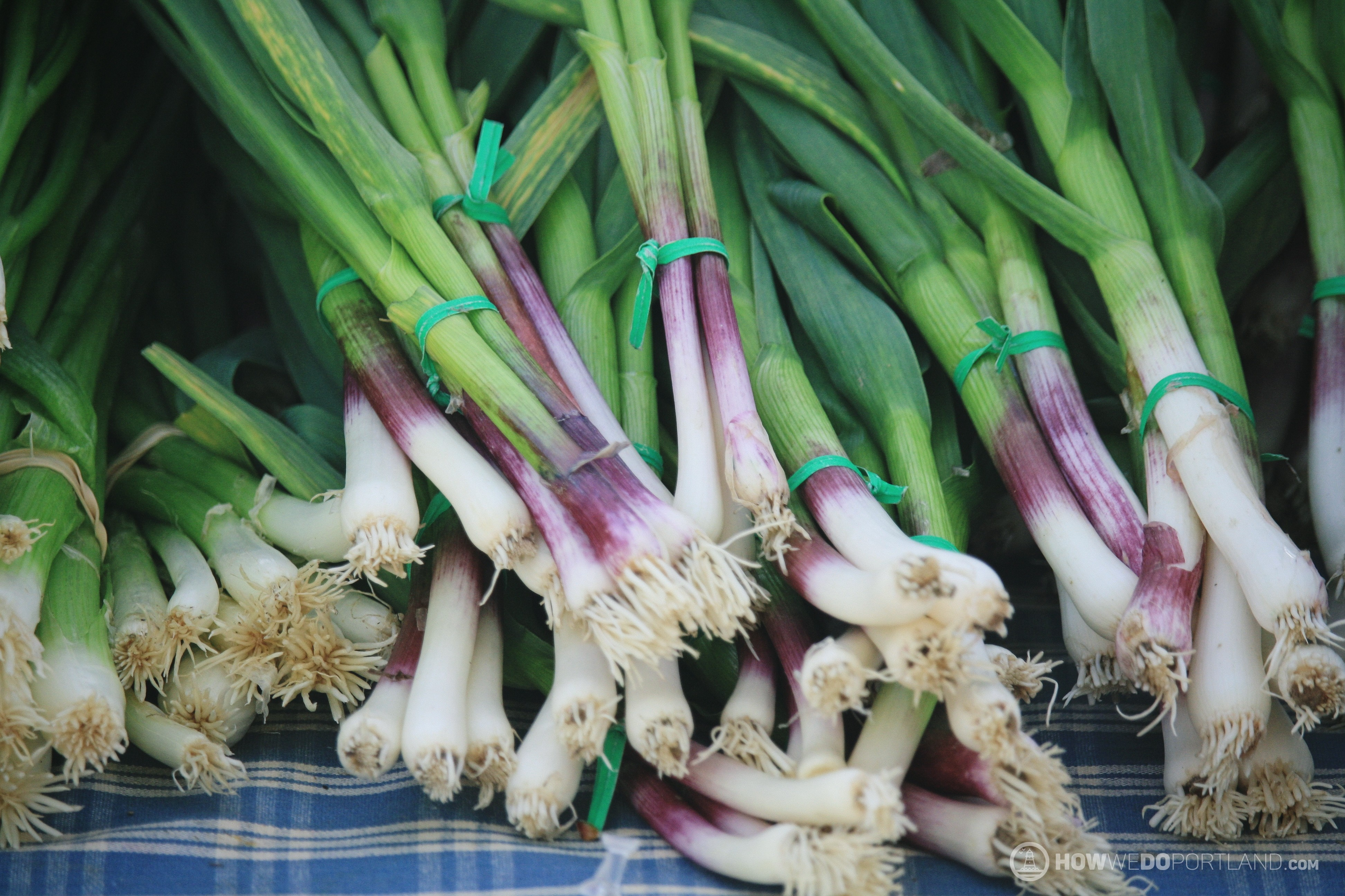 Brightly colored scallions