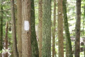 Portland Trails White Blaze Presumscot River Preserve