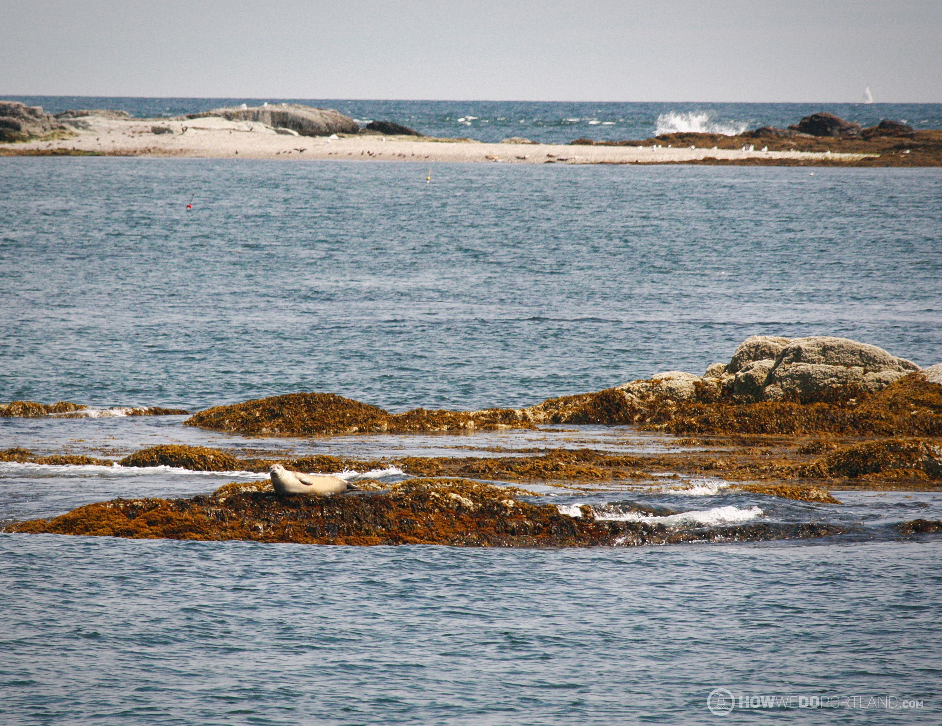 Seal Sunbathing on Casco Bay