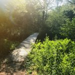 Stroudwater Trail: Bridge Near Trailhead